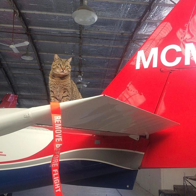 Bad weather days may mean no flying for us, but it sure doesn't get Norman's spirits down! We thought a photoshoot with our company mascot would be a great way to pass some time, however the word cooperation isn't a part of his vocabulary! We got there in the end :) #MilfordSoundScenicFlights #NormanMcTabby #catsofinstagram #queenstown #destinationnz